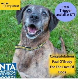 http://www.dogstrust.org.uk/rehoming/dog/1013945/tiggerbru#.Ut_4ELTFIr0