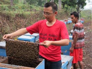 Sisiran Penuh Lebah Raja Madu Madu Raja