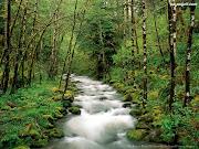 Las. Rzeka. Góry(Tylko dla wyszkolonych) (rzeki las)