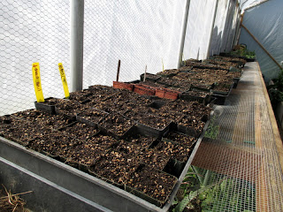 seeds for watermelon, squash, zucchini, tomatoes, basil, cucumbers and sunflowers