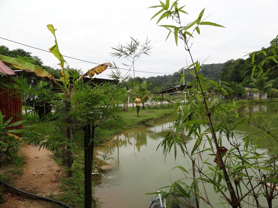 Fishing spots in kuala lumpur selangor danau serendah for Freshwater pond fish