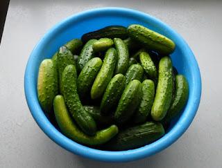 2.08. Огурчики в разгаре. Зеленцы приготовлены для солений.