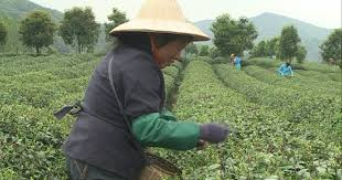 فيديو دروس عن الأساليب الزراعية الحديثة