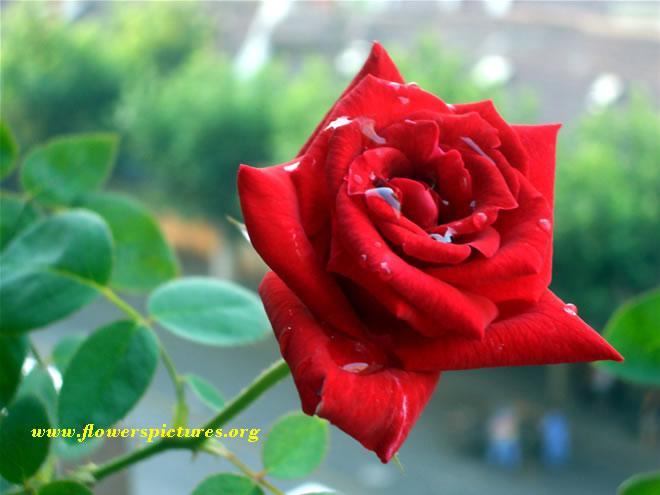 All hiroin chut ki photo hd xxx.com - dfuor.akebe.work