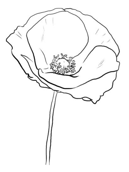 Line Drawing Poppy Flower : Poppy line drawing pixshark images galleries