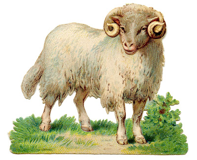 Vintage Sheep Image Curly Horns Farm Animal Graphic