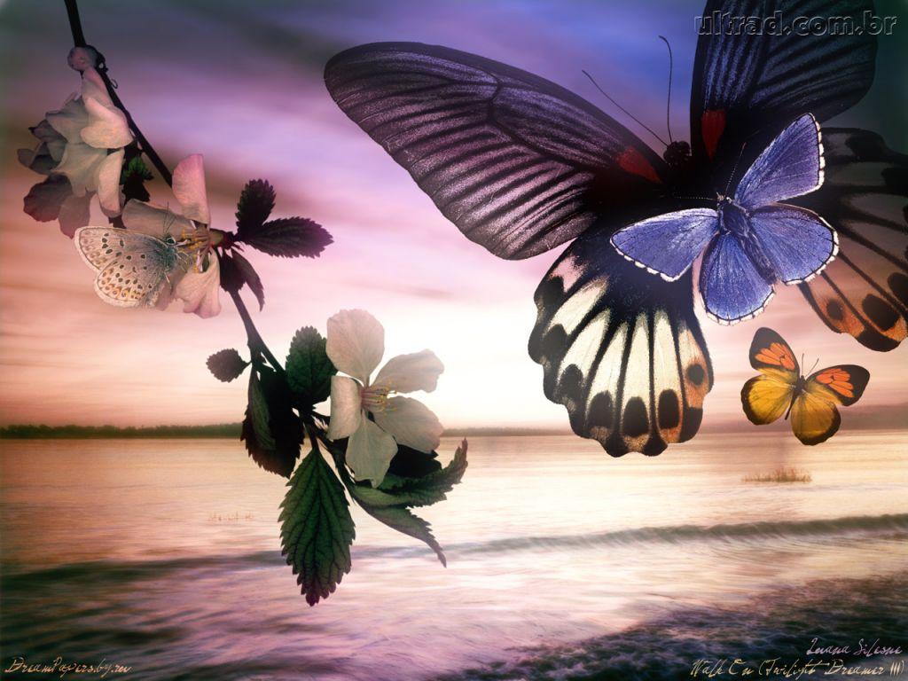 http://1.bp.blogspot.com/-jOPzFMSPw1o/UCAGb4OWW4I/AAAAAAAAAYA/wIw1U_dYIVs/s1600/borboletas.jpg