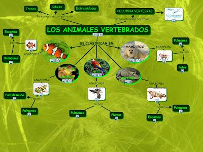imagenes de animales invertebrados y vertebrados - Aula365 Vertebrados e invertebrados