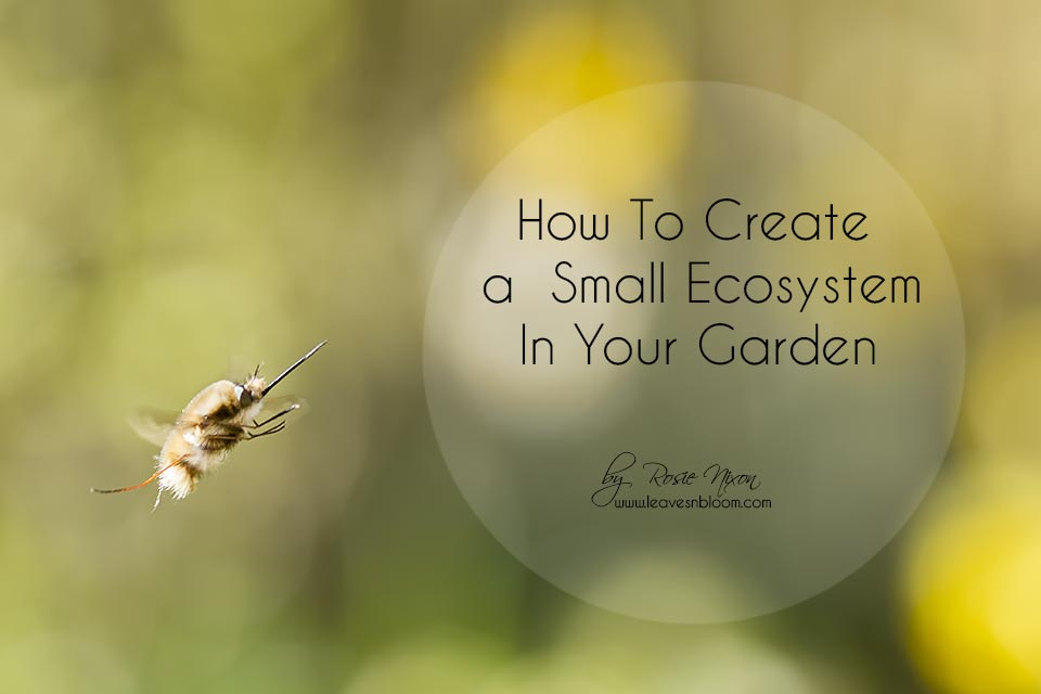 how to create a small ecosystem in your garden with bee-flies
