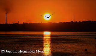 http://hernandezmena.blogspot.com/2014/04/motivos-contra-luz.html