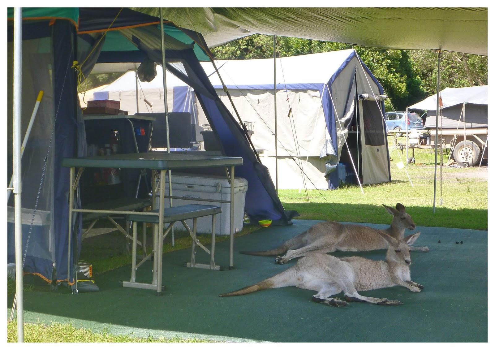 Kangaroo+camping.jpg