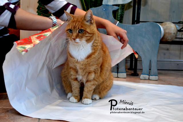 Katze Mimi wird mit Geschenkpapier umwickelt