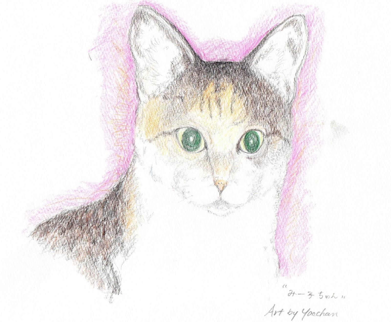 やっちゃんのネコと動物イラスト: モデルのネコ・写真とリアル画