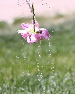 flower photography ideas