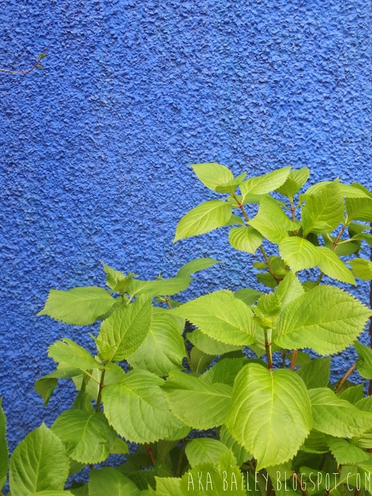 Blue stucco house, bright green plants