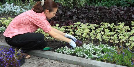 Defendiendo la naturaleza - Cuidado de jardines ...
