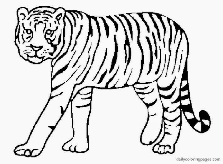 Realistic Tiger Coloring Pages