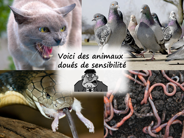 pigeon, chat, rat, serpent, lombric ... des animaux sensibles