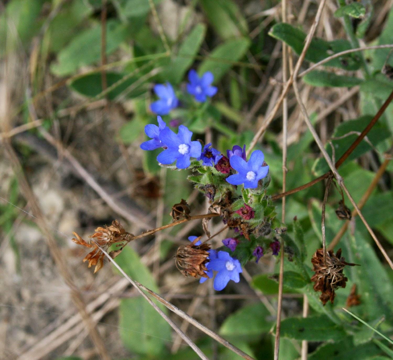 Random tiny blue flowers