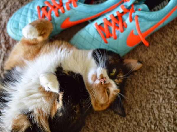 Cupcake Loves Shoes!