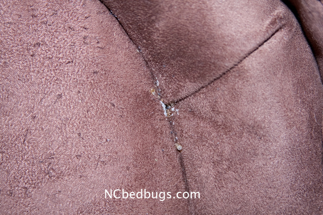 Dr Bed Bug Free Education Material On Bed Bugs Cimex Lectularius August 2012