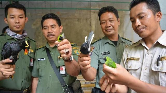 Scorpion Sesalkan Matinya Ribuan Burung Hasil Sitaan BBKSDA Jatim