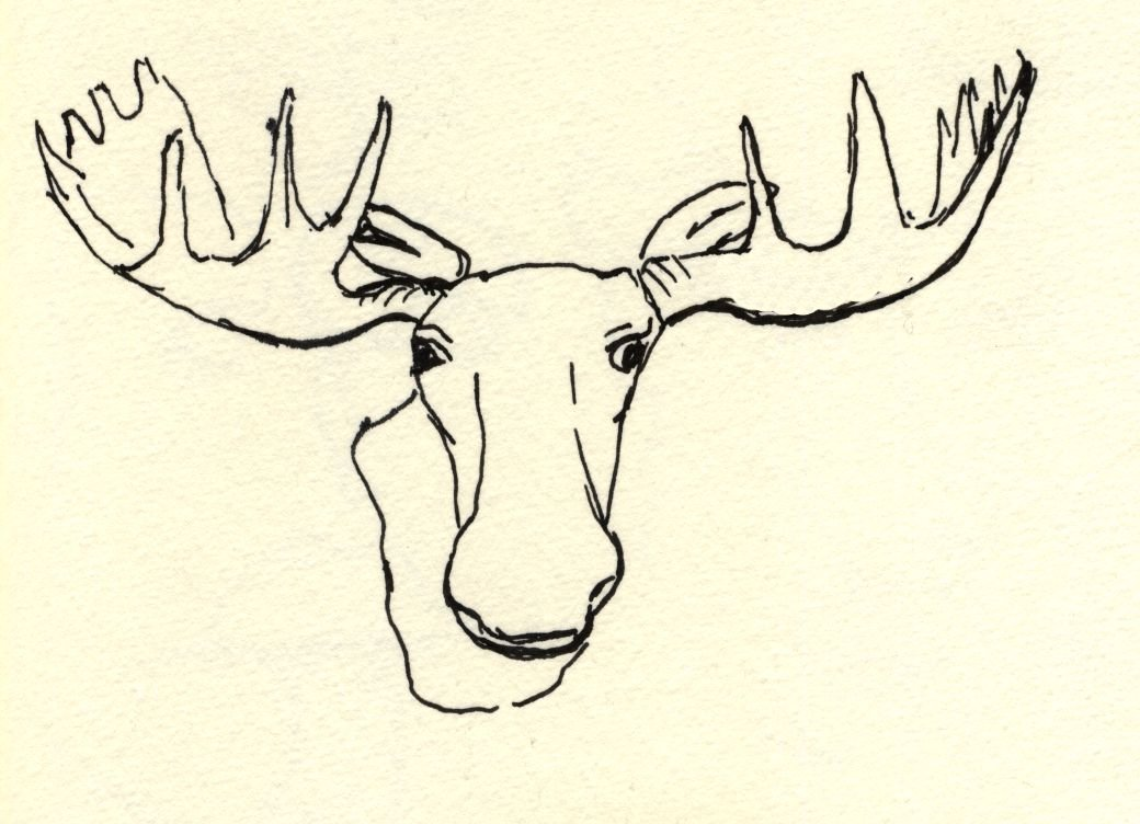 Moose head drawing for How to draw a moos