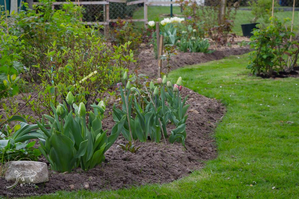 Le jardin de triton les bordures ou comment tourner en for Solde plante jardin
