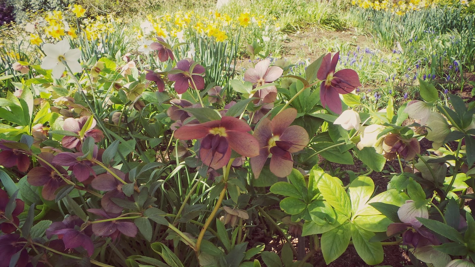 harrogate garden harlow carr