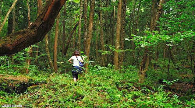 Berburu Harta Karun di Hutan Larangan Riau