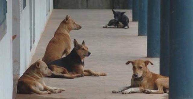 فيديو| تعرف على السبب الحقيقي وراء نباح الكلاب أثناء الأذان !!