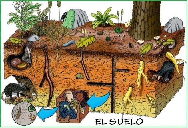 Ciencias naturales grado segundo el suelo for Como se forma y desarrolla el suelo
