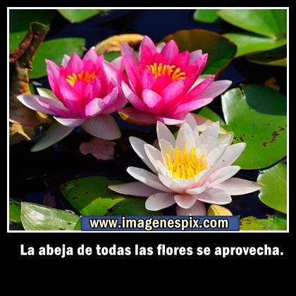 Imágenes de corazones hermosos Fotos Tiernas - Imagenes Corazones Con Flores