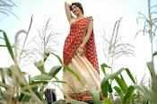 Tanvi vyas Latest Photos in Half Saree-thumbnail-17