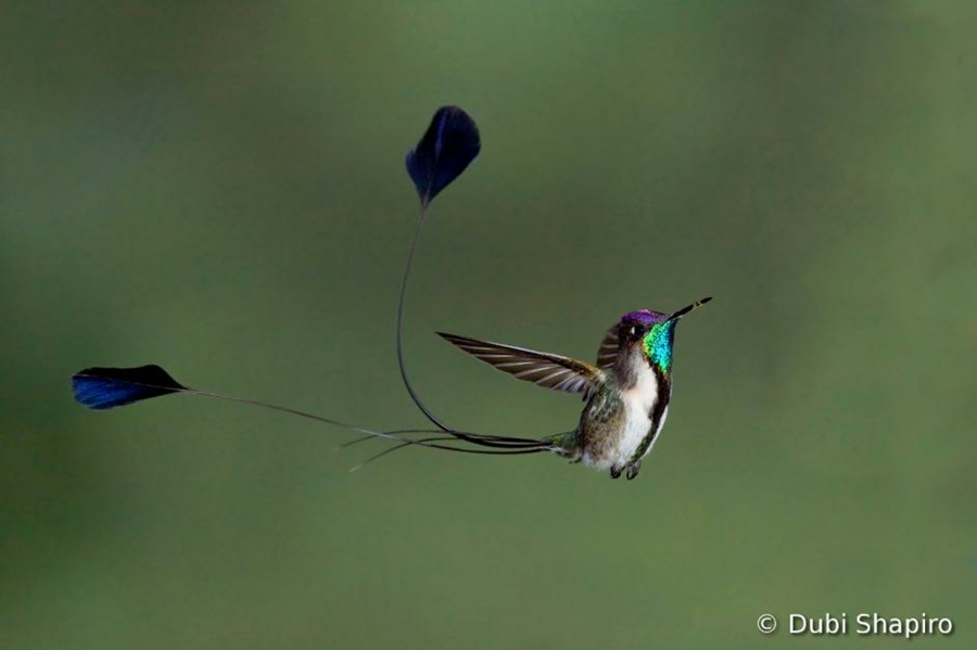 اجمل صور الطيور ل 2012 0_89285_3e2469db_orig