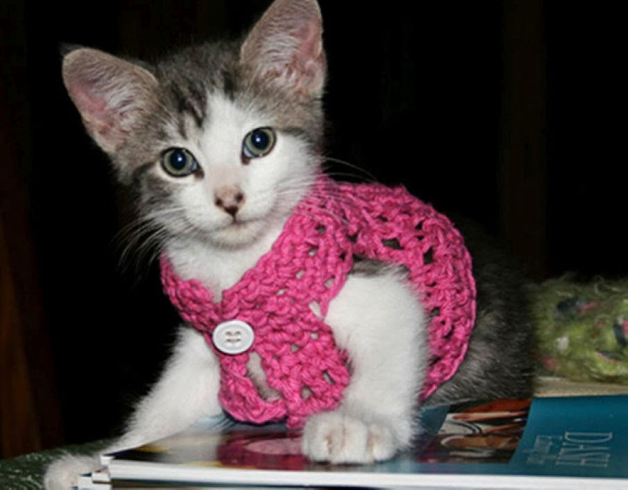 These 22 Kitties Are Ready For Fall in Classy Cute Cardigans