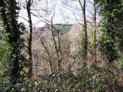 Kings Wood Pentewan Valley Cornwall