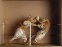 Cara Menghentikan Perkelahian Hamster