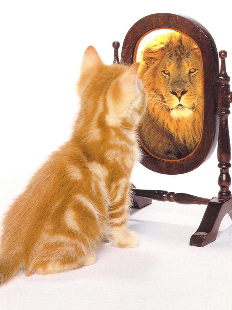 autodesvalorizacion autoestima causas soluciones verfractal