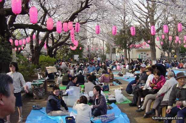 Festival Sakura [2]