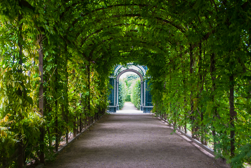 Green rose tunnel in Schönbrunn Palace in Vienna, Austria