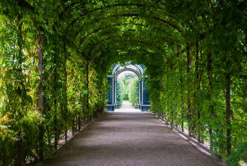 Green rose tunnel in Schönbrunn Palace in Vienna, Austria
