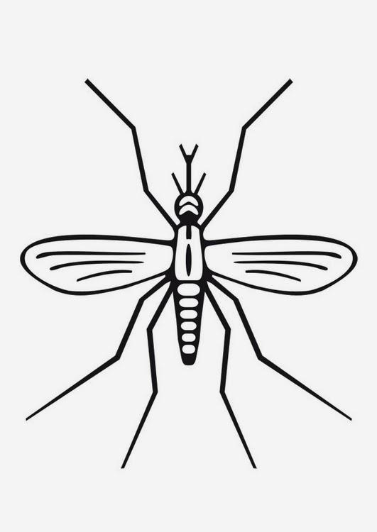 desenho de mosquito para colorir cuidado com o mosquito transmissor
