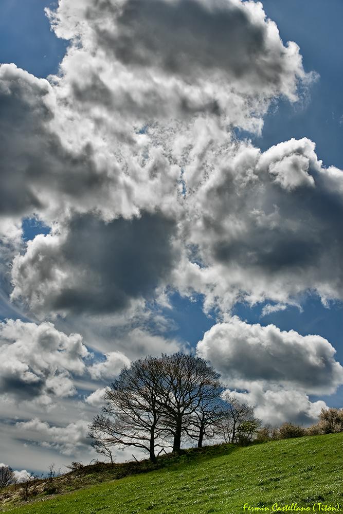 Cielo,árboles,pradera