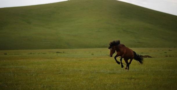 Descodificado genoma de cavalo com 700 mil anos