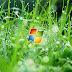 හැමදාම දකින Windows වල Boot screen එක වෙනස් කරමු.