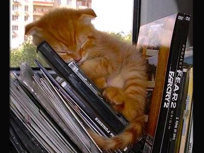 Foto kucing sedang tidur 03