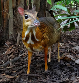 narrative text - the story of mouse deer and crocodile
