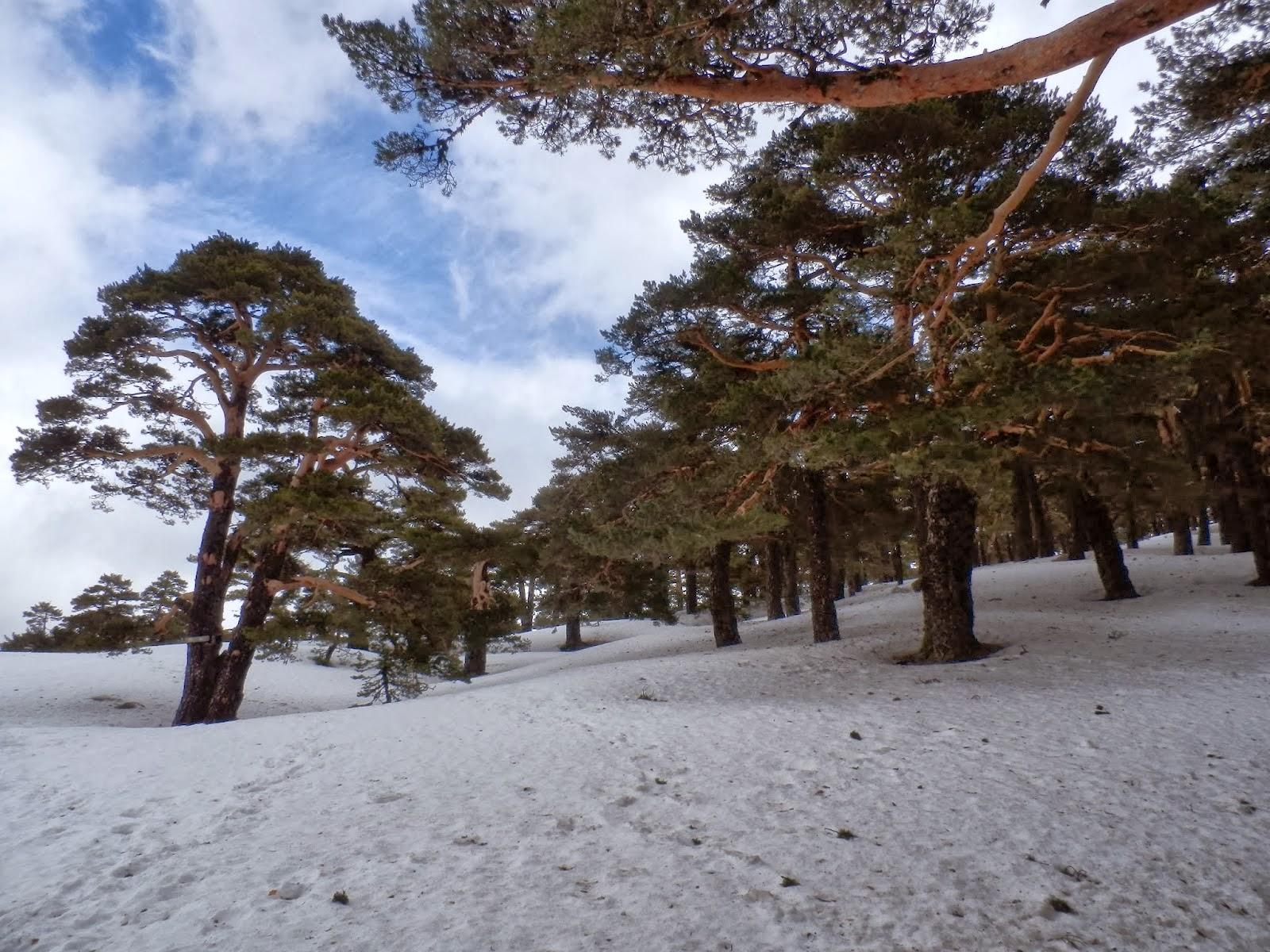 Un-paisaje-nevado-del-Camino-Schmidt-en-primavera
