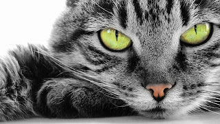 Cats Eye Wallpaper